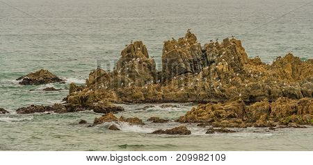 Seagulls Perched In Rocky Outcropping