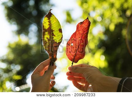 Friends holding leaves