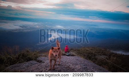 Happy dog and men sitting on a cliff side