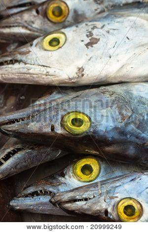 Several Asian Ribbon Fish