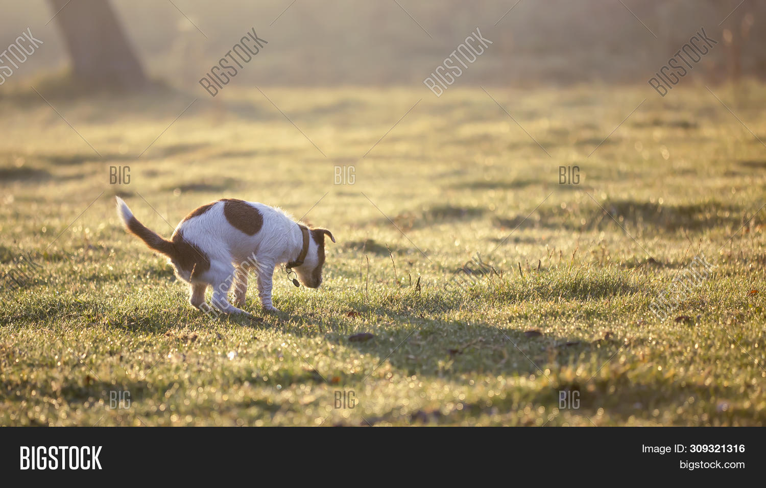 Banner Cute Dog Puppy Image Photo Free Trial Bigstock