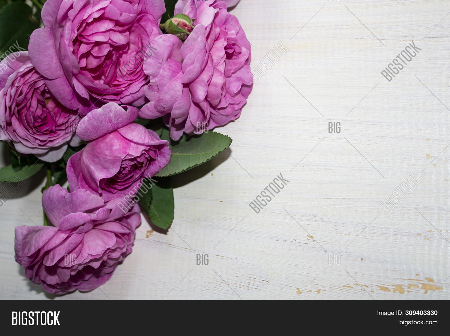 Beautiful Pink Flower Image Photo Free Trial Bigstock