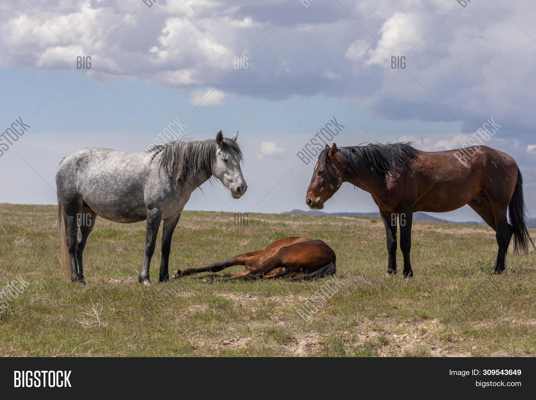 Beautiful Wild Horses Image Photo Free Trial Bigstock