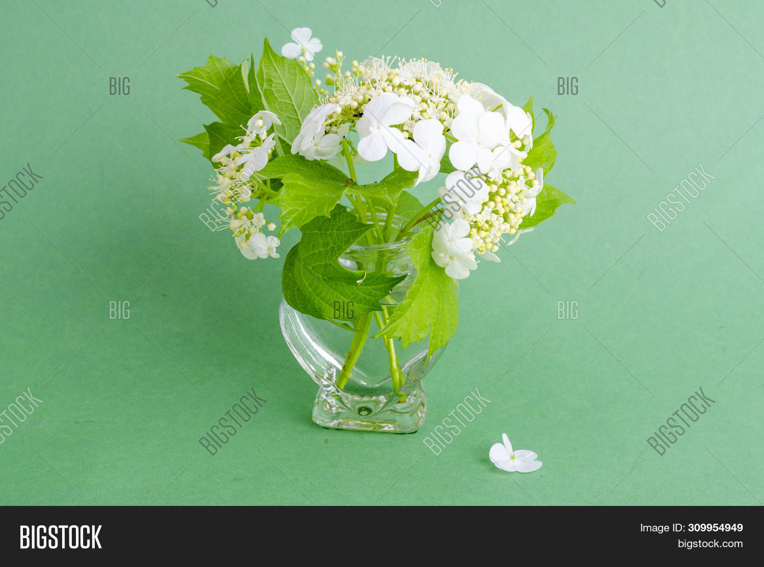 Small Vase Sprigs Image Photo Free Trial Bigstock