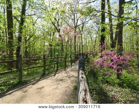 Forest Within The Mount Vernon Estate, Virginia