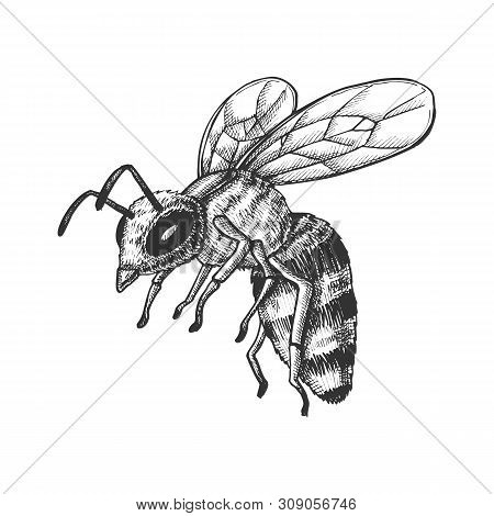 Flying Honey Bee Insect Gathering Nectar Vector. Bee With Wing And Feeler. Fly Animal Honeybee Natur