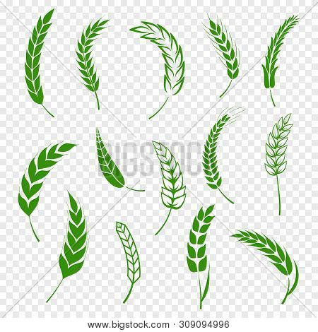Set Of Simple Green Wheats Ears Icons And Wheat Design Elements For Beer, Organic Or Local Farm Fres