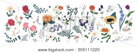 Collection Of Wild Blooming Meadow Flowers Isolated On White Background. Bundle Of Wildflowers Used