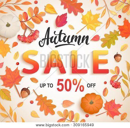 Autumn Big Sale Banner, 50 Percent Discount Card With Scattered Seasonal Fall Leaves, Rowan, Pumpkin