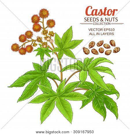 Castor Plant Vector Set On White Background