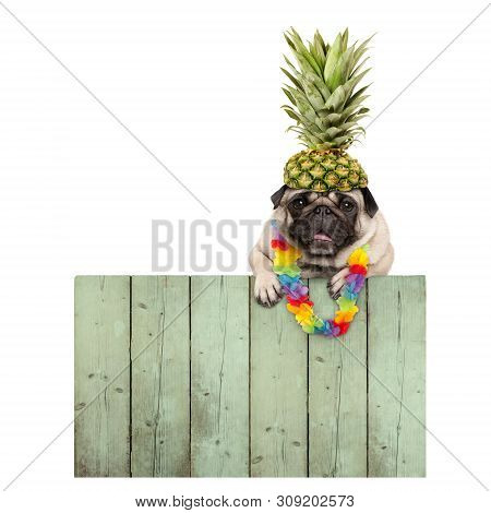 Frolic Smiling Tropical Summer Pug Puppy Dog With Flower Garland, Hanging With Paws On Reclaimed Woo