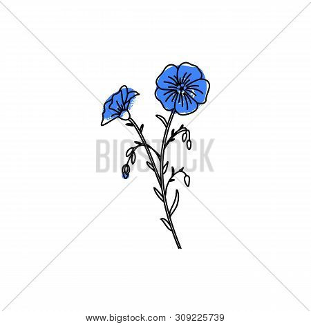 Vector Illusration Of The Flower Of Flax. For The Design Of Linseed Oil, And Linseeds . Botanical Ic