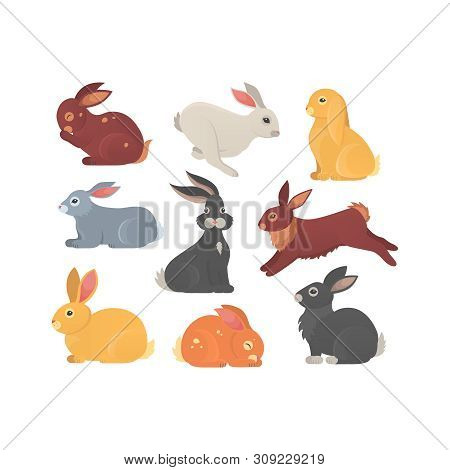 Vector Set Of Cute Rabbits In Cartoon Style. Bunny Pet Silhouette In Different Poses. Hare And Rabbi