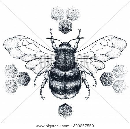 Striped Bee Tattoo. Honey Bee Sits On Honeycombs. Dotwork Tattoo On Chest, Back Or Thigh. Symbol Of