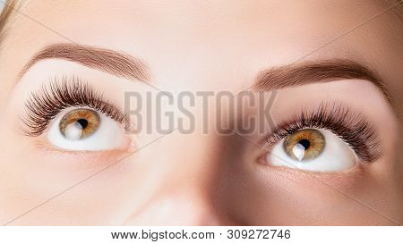 Eyes With Long Eyelashes. Classic 1d, 2d Eyelash Extensions And Light Brown Eyebrow Close Up. Eyelas