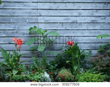 Plants And Flowers Grow Along A Wood Plank Wall Backing