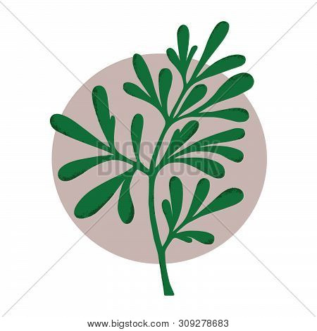 Medicinal Plant. (ruta Graveolens. Botanical Vector Illustration. Can Be Used For Cards, Invitations