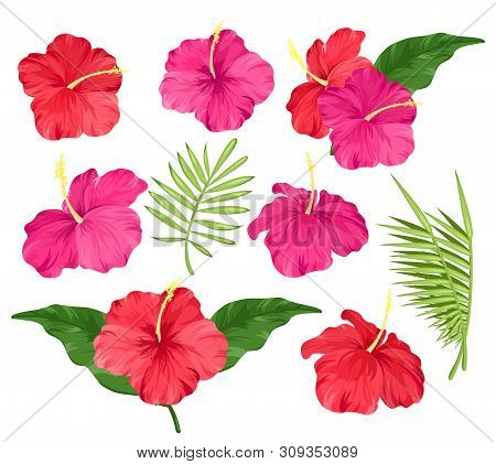 Vector Illustration Of Hibiscus Flowers Pink And Red Color, Tropical Flowers, Palm Leaves, Hibiscus