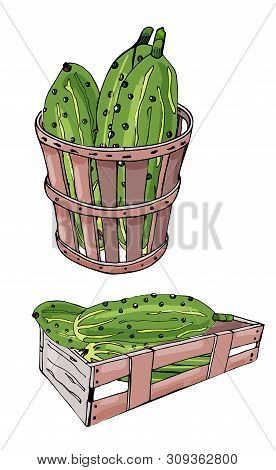 Collection Of  Green  Hand Drawn Cucumbers, Box And Basket. Ink And Colored Sketch. Color Elements I