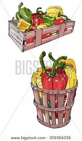 Box And Basket With  Hand Drawn Color Sweet Peppers. Ink And Colored Sketch. Color Elements Isolated