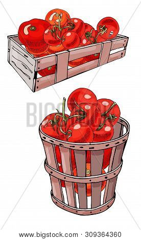 Set Of Box And Basket With  Hand Drawn Red Tomatoes. Ink And Colored Sketch. Color Objects Isolated