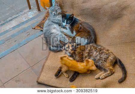 Homeless Many Stray Cats. Dirty Cats Need A New Home