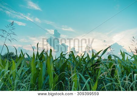 Save Download Preview Sunset In Countryside Landscape. Fields And Countryside Landscape. Nature Land