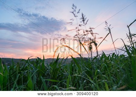 Sunset In Countryside Landscape. Fields And Countryside Landscape. Nature Landscape. Sunset In Wheat