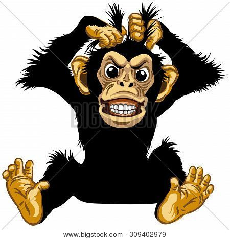 Cartoon Chimp Great Ape Or Chimpanzee Monkey Pulls His Fur Hair Out And Showing His Teeth. Angry Or