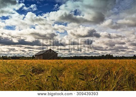 An Old Barn House In The Middle Of The Rye Field On A Summer Day At The Rural Finland. The Sky Is Fu