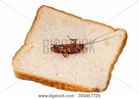 Cockroach Isolated On White Background ,top View A Dead Cockroach On A Slice Of Bread
