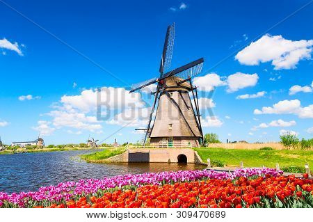 Colorful Spring Landscape In Netherlands, Europe. Famous Windmill In Kinderdijk Village With A Tulip