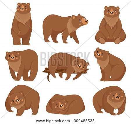 Cartoon Brown Bear. Grizzly Bears, Wild Nature Forest Predator Animals And Sitting Bear. Fur Brown P