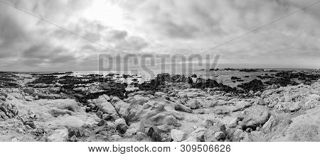 Scenic Beach Landscape With Rocks At Asilomar Dunes, California, Pacific Grove