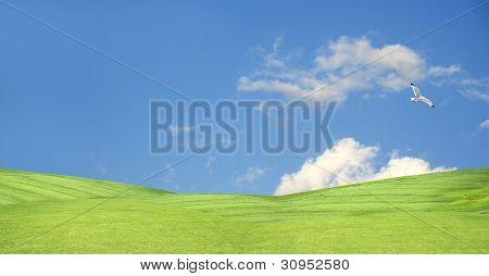 the peacefull blue sky and grass