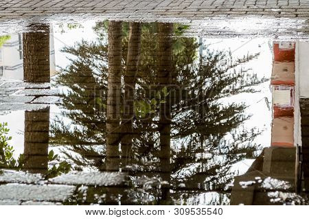 Pine Tree And Building Reflections In A Puddle On A Pavement After The Rain.