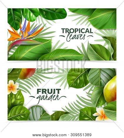 Fruit Trees Leaves Horizontal Banners. Two Horizontal Banners With Isolated Tropical Flowers Fruit T