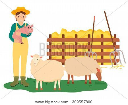 Tending animals at farm vector, farming woman holding pig standing by sheep and hay with instruments for dried grass. Farmer busy with work isolated poster