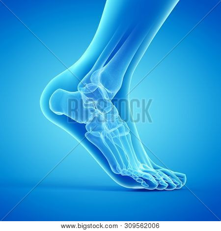 3d rendered medically accurate illustration of the bones of the foot