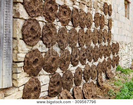 Dung, Round-shaped Dung Cakes Were Stuck On The Wall Of The Building To Dry. Preparation Of Fuel For