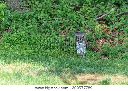 Fake Plastic Owl Decoy Keeping Watch At The Edge Of The Woods Meant To Scare Birds Away