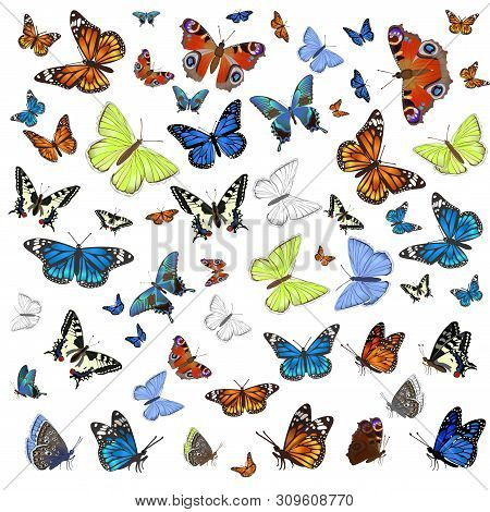 A Collection Of Different Butterflies Flying And Seated. Isolated On White Background. Vector A Coll