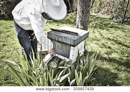 Commercial beekeeper at Work, Cleaning and Inspecting hive, looking for dead brood removal. Authentic scene of life in nature. Hive management poster
