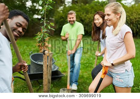 Team volunteer plants a tree together in the park during a climate protection campaign