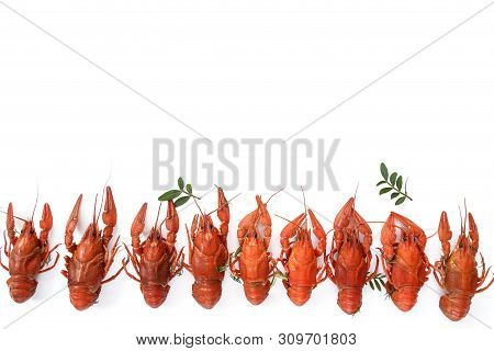 Several Boiled Crawfish Isolated On White. Top View. Flat Lay