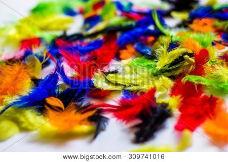 Multi Colored And Colorful Feather Background.background From Feathers Of  Birds. Bright Colored Fea