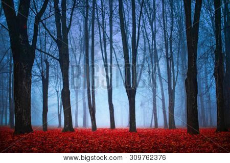 Beautiful Mystical Forest In Blue Fog In Autumn. Colorful Landscape With Enchanted Trees With Red Leaves. Dreamy Foggy Forest. Nature background