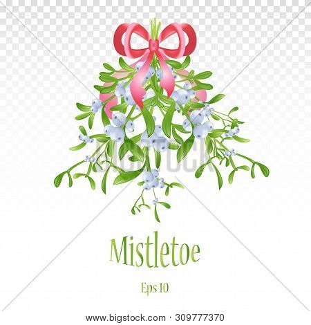 Branch Of Mistletoe With Berries. A Bouquet Of Christmas. A Large Bouquet Of Mistletoe With Green Le