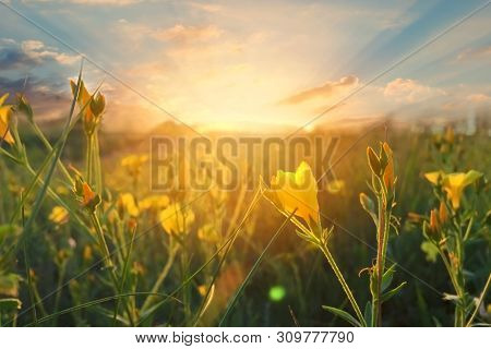 Wild Flowers At Morning On Sunrise Background. Sunny Dawn In The Countryside. Soft Focus