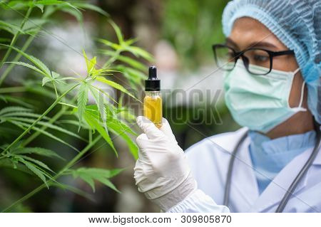 Cbd Hemp Oil, Doctor Holding A Bottle Of Hemp Oil, Medical Marijuana Products Including Cannabis Lea